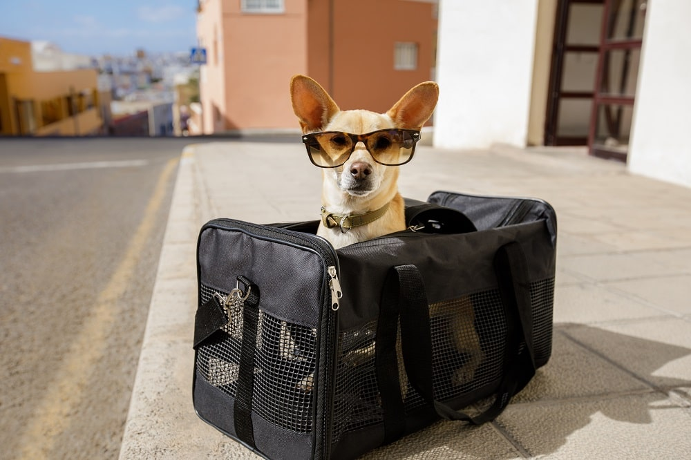 Excess Pet Baggage