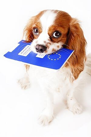 Changes to rules post-Brexit will affect how pets with EU Pet Passports can travel